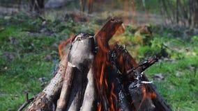 Br?lez le feu avec du bois dans la pelouse de Forest Green dans la for?t sur le fond du feu clips vidéos