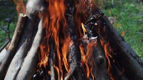 Br?lez le feu avec du bois dans la pelouse de Forest Green dans la for?t sur le fond du feu banque de vidéos