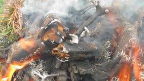 Brûlure de bois de chauffage banque de vidéos
