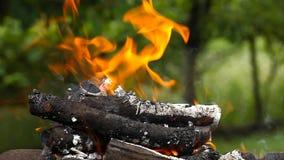 Brûlure de rondins avec une flamme lumineuse banque de vidéos