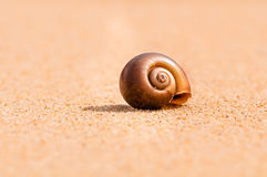Br0wn sandy snail Royalty Free Stock Photography