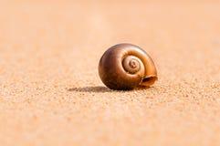 Br0wn sandy snail Royalty Free Stock Photography