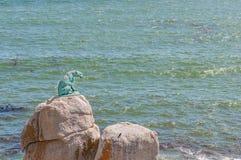 Brązowy lampart Hout zatoka Zdjęcie Stock
