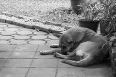 br?zu przyb??kany pies obok ulicy fotografia royalty free