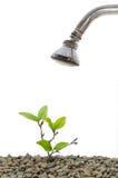 Brać prysznić rośliny Obraz Stock