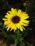Bra bilder, av biuty naturliga naturs Royaltyfria Foton