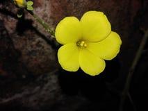 Bra bilder, av biuty naturliga naturs Royaltyfria Bilder