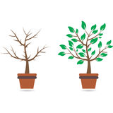 Bra och dåligt träd, illustration Royaltyfria Bilder
