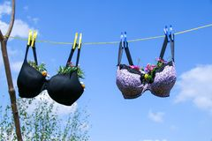 Bra pegged on a washing line with plants growing in them. Recycled old bra pegged on a washing line with plants growing in the cups against a clear blue sky in stock images
