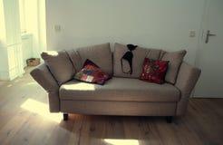 Bra on the sofa Stock Photos