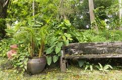 Bra ställe som vilar i en tyst tropisk trädgård arkivbilder