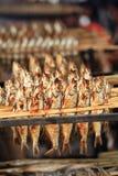 Braadstukvissen royalty-vrije stock afbeeldingen