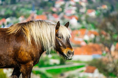 Brabancon belgian horse on the farmland, Alsace, France Stock Images
