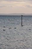 Brac-Insel, Kroatien Lizenzfreie Stockfotografie