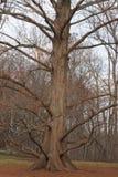 A braccia aperte nella foresta, inspiriamo chiaramente, aria fresca, solo per cominciare ancora Fotografia Stock Libera da Diritti
