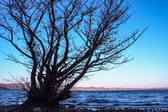 Bracciano lake at sunset Stock Photography