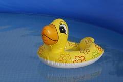 Braccioli Ducky in uno stagno Immagini Stock Libere da Diritti