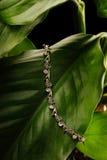 Bracelet argenté avec des diamants s'étendant sur une feuille verte Images stock
