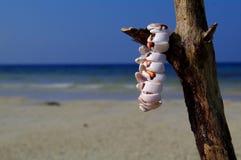 Bracelet on the beach. Beach ocean white sant and bracelet on the stick Stock Images