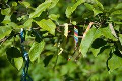 Braceletes das linhas Foto de Stock Royalty Free