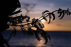 Brach tree highlighted by sunset at Anaeho'omalu beach Stock Photos