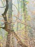 Braches dell'albero su una luce solare di mattina all'autunno tardo nella foresta di Kosutnjak, Belgrado fotografie stock libere da diritti
