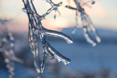 Braches gelados da árvore Foto de Stock Royalty Free