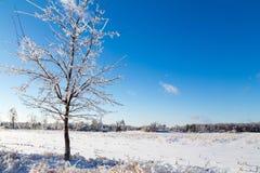 Braches gelados da árvore Fotografia de Stock Royalty Free
