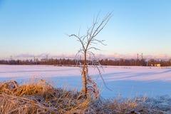 Braches gelados da árvore Fotos de Stock Royalty Free