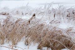 Braches ghiacciati dell'albero Fotografia Stock