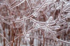 Braches ghiacciati dell'albero Fotografia Stock Libera da Diritti