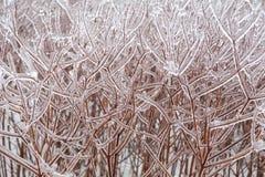 Braches ghiacciati dell'albero Immagini Stock Libere da Diritti