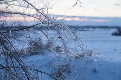 Braches ghiacciati dell'albero Fotografie Stock