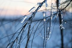 Braches ghiacciati dell'albero Immagine Stock
