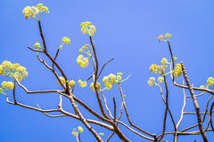 Braches mit gelber Blume Stockfoto