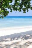 Braches Seascape и дерева Стоковые Фотографии RF