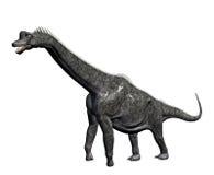 Brachiosaur Dinosaur Stock Images