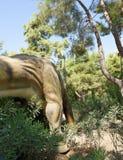 Brachiosaurus-πρόσφατη ιουρασική περίοδος το /156-145 εκατομμύριο πριν από χρόνια Στοκ Εικόνα