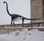 Brachiosaurus στο χιόνι Στοκ Φωτογραφία