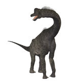 Brachiosaurus 01. The Brachiosaurus dinosaur was a sauropod from the Jurassic Period. Its forelimbs were much longer then its hind limbs giving it the look of Stock Image