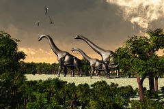 Brachiosaurus 02. Three Brachiosaurus dinosaurs walk through a forested area while three Pterosaurs fly overhead Stock Photos