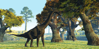 Brachiosaurus. Two Brachiosaurus dinosaurs walk among large trees in the prehistoric era Royalty Free Stock Images