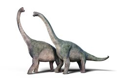 Free Brachiosaurus Altithorax Couple 3d Render Isolated On White Background Stock Image - 114468121