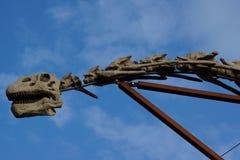 Brachiosaurus - brachiosaurusa altithorax Zdjęcia Stock