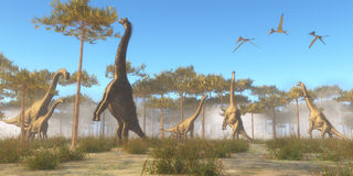 Brachiosaurus Browsing. Brachiosaurus was a herbivorous sauropod dinosaur that lived in the Jurassic Age of North America. A Brachiosaurus herd browse on tree Stock Image