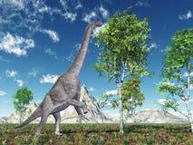 Brachiosaurus de dinosaure Images libres de droits