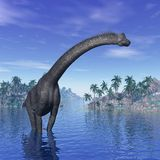 Brachiosaurus dinosaur - 3D render Royalty Free Stock Photos
