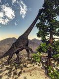 Brachiosaurus dinosaur eating wollomia pine - 3D Royalty Free Stock Photography