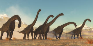 Brachiosaurus Dinosaur Herd. A Brachiosaurus dinosaur herd pass through a dry desert area in the Jurassic Period of North America Stock Photo