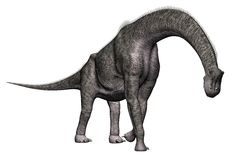 Brachiosaurus Dinosaur Walking Royalty Free Stock Photos